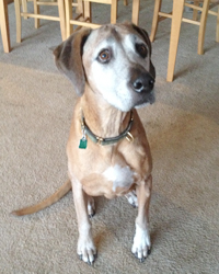 Mowgli loves his treatments, especially the treats!